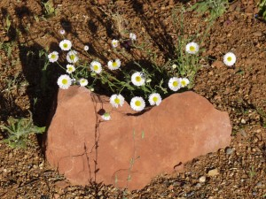 Heart stone with daisies, Sedona AZ - photo by Lucille (c)