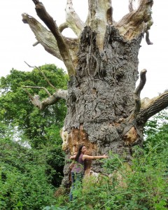 Lucille with ancient Oak in UK - photo by Eva (c)