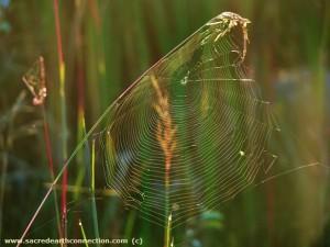 Sunrise-spiderweb