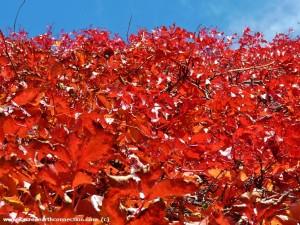 leafy-wall
