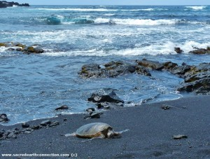 Hawaii-sea-turtle