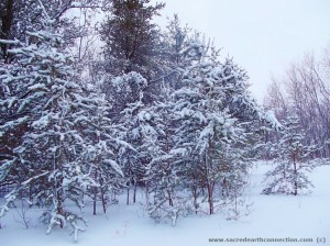 new-snow