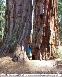 Lucille-and-Sequoias-at-Mariposa-Grove