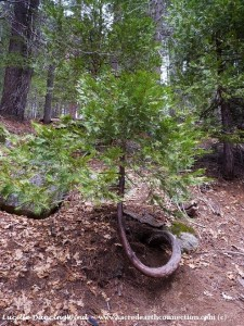 tree-seedling-growing-its-own-way