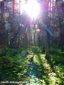 Alaska enchanted forest