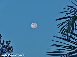 full moon Hawaii