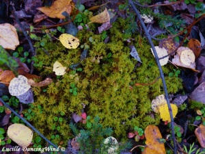 AK forest floor