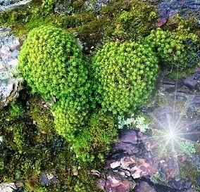 moss heart with Fae light