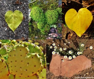 Nature and Spirit Love Hearts