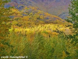 AK season Autumn