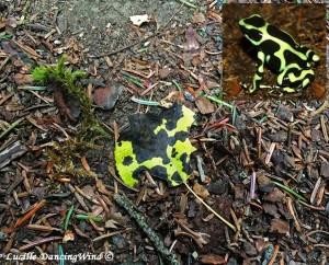 froglike leaf
