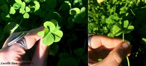6-leaf'd clover AK